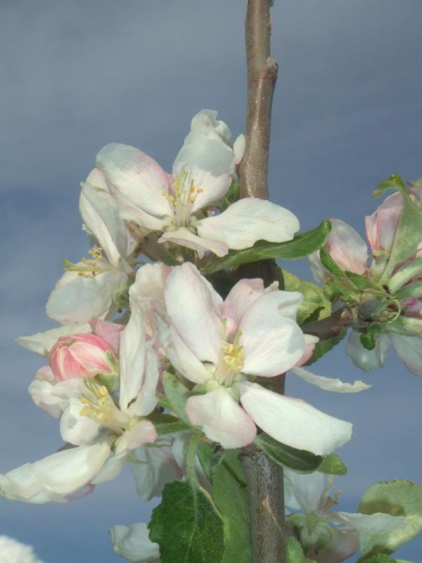 Le Gite des Hesperides : jardin en fleurs