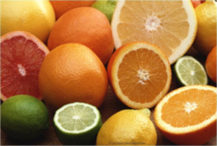 Le Gite des Hesperides : oranges et citrons