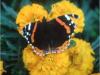Le Gite des Hesperides : fleurs et papillon.jpg