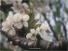 Le Gite des Hesperides : fleurs
