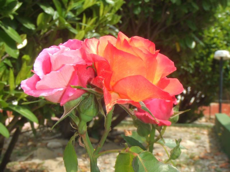 Le Gite des Hesperides : jardin fleuri