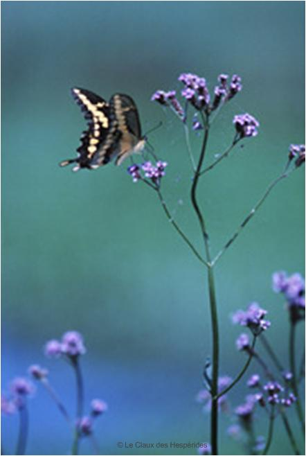 Le Gite des Hesperides : au coeur de la Provence Naturelle