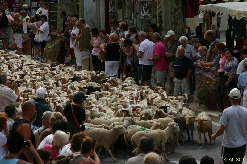 Le Gite des Hesperides : fête de la transhumance Riez-la-Romaine